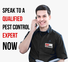 Speak to a Qualified Pest Control Expert