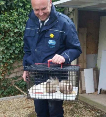 Pest Controller captures wild skunk in Surrey