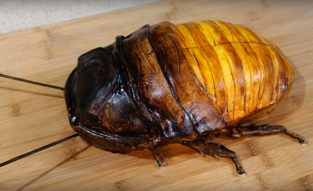 Is this the biggest cockroach in the world?