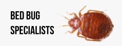 Bed Bug Pest Control Specialists
