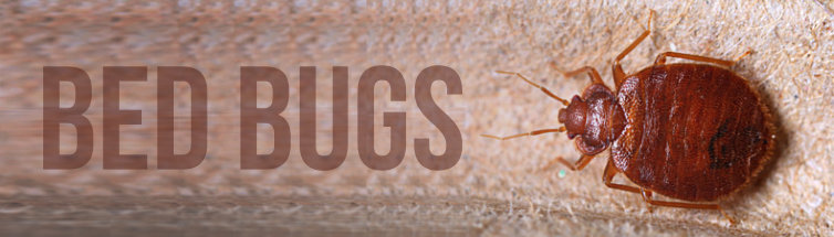 Bed Bugs Treatment Image