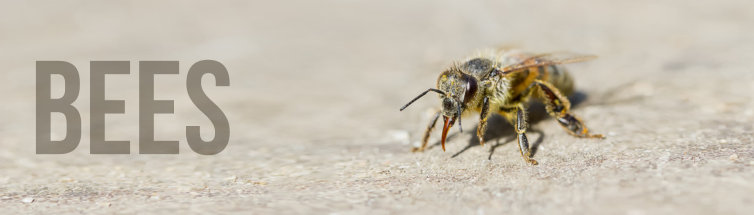 Bee Removal Leicester - Expert Advice + Local Call Outs