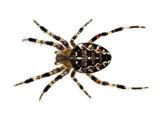 Spider Pest Removal
