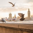 UK spending cuts spark a plague of pests