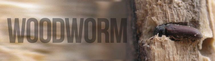 Woodworm Treatment Image