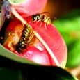 Wasps: The Sugar Rush Is On!