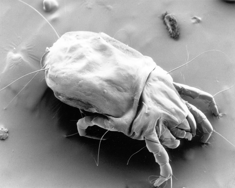 Ten million dust mites in your bed