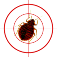 Heat treatment for bed bugs – what to look out for; and what to avoid at all costs!!