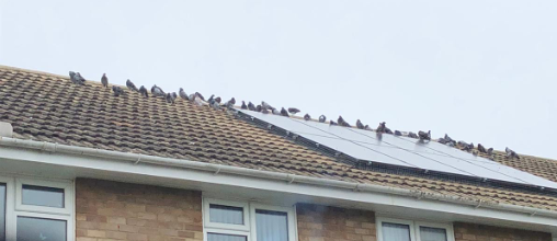 Pigeon on Roof Problem
